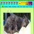 Dogsholiday (Vakantiehuis en Kampeermogelijkheid)